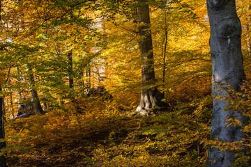 Wald, Herbst, Blätter