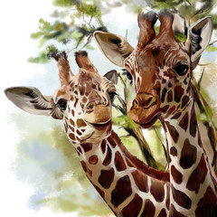 Giraffes watercolor painting