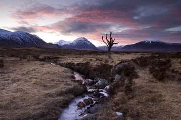 Winter view of Rannoch Moor at sunset with dead tree, frozen stream and snow-covered mountains in the distance, near Fort William, Highland, Scotland, United Kingdom, Europe