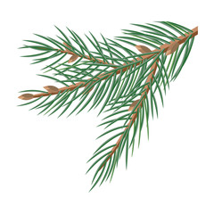 Pine Tree Branches with Cones Christmas Decoration