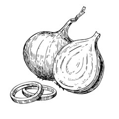 Onion hand drawn vector illustration. Isolated Vegetable engraved rings