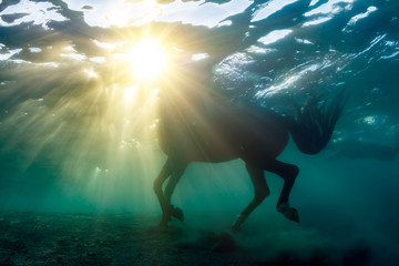 A horse underwater