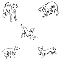 Dogs. Sketch pencil. Drawing by hand. Vector