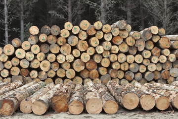Forestry logs, Waikato, North Island, New Zealand, Pacific