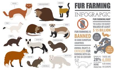 Fur farming infographic template. Flat design Wall mural