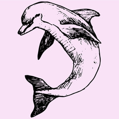 dolphin doodle style sketch illustration hand drawn vector