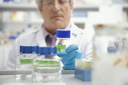Closeup of a blurred mature male scientist looking at specimen in laboratory