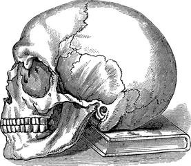 Vintage image skull