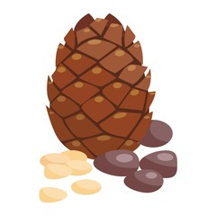 Brown pine cone isolated on white background.