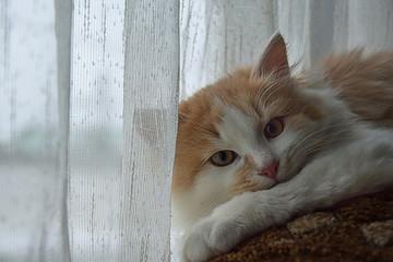Kitten on a chair