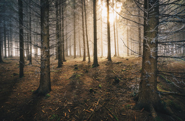 Sunlight in the Forest with ice and fog
