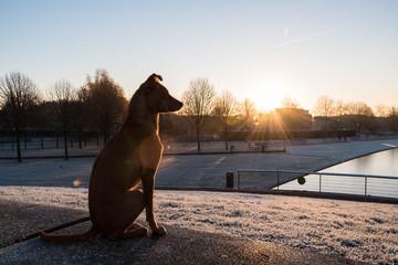 Foto auf AluDibond Hund Hond kijkt over park