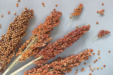 Sorghum on silver-gray background. top view