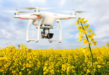 Drone quadrocopter over blooming rapeseed. Farmer use drone for inspect of crop on rapeseed fields. Modern technology in agriculture.