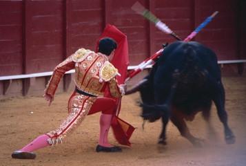 Steering the bull by left horn tip, bullfighting, Spain, Europe