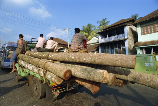 Transporting coconut trees to saw mill, Kerala state