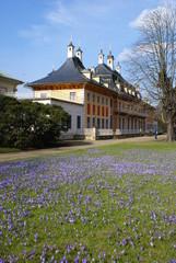 Frühling am Schloss Pillnitz