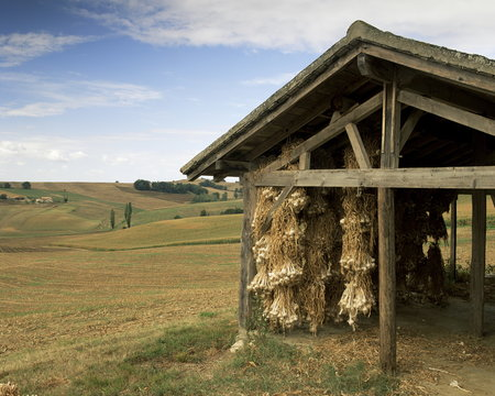 Garlic drying, near Condom, Gascony, Midi Pyrenees, France