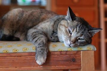 Sad Cat on Chair
