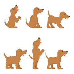 Set with dog in different poses