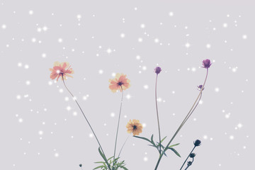 Yellow or orange cosmos flowers lonely stand among falling snow