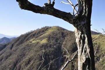 丹沢山の古木と不動ノ峰