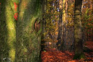 Herz an einem Baum
