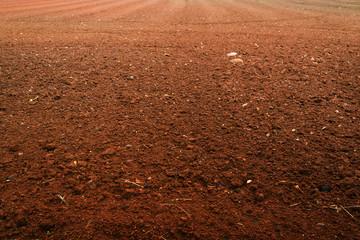 Soil preparation for vegetable plantation.