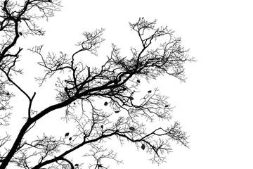 Bare trees isolated on white sky background
