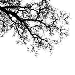Realistic tree branches silhouette (Vector illustration).Eps10