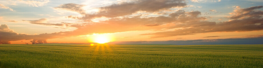 Fototapete - Beautiful landscape at sunset. Green wheat field at sunset, border design panoramic banner