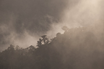 Cloud Forest, High Andes of Ecuador