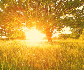 Colorful summer background with sun rays