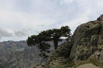 A tree on the mounatin top.