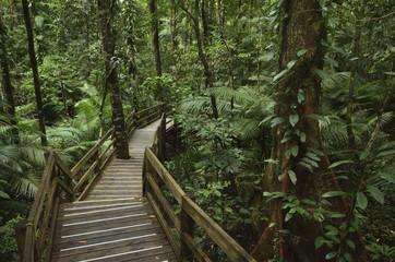 Boardwalk through rainforest, Daintree National Park, UNESCO World Heritage Site, Queensland, Australia, Pacific
