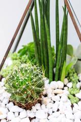 Terrarium with desertic plants