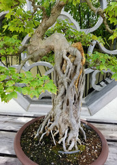 Bonsai landscape detail with miniature tree trunk in front of an ornate Chinese window