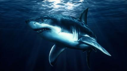 Hand painted swimming big shark.
