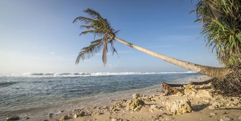 Strand, Palmen, Meer_2