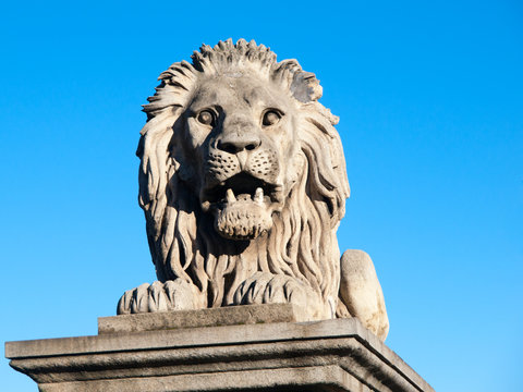 Lion sculpture on Chain Bridge in Budapest, capital city of Hungary, Europe. Detailed shot on blue sky background.