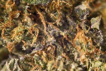 """Macro detail of cannabis bud from """"rockstar kush"""" marijuana stra"""