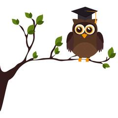owl with hat graduation vector illustration design