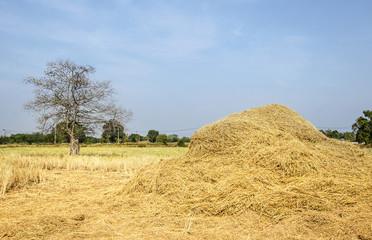 Straw Background ,Plant, Wheat, Hay, Textured, Straw
