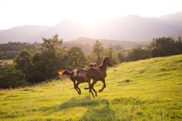 牧場を走る馬