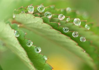 Drop of Water