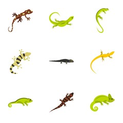 Lizard icons set. Flat illustration of 9 lizard vector icons for web