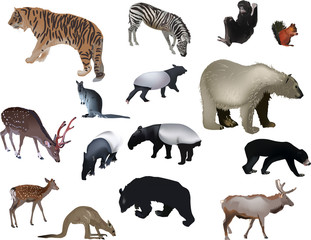 fifteen color animals on white background