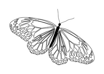 Abstract isolated line art butterfly in black and white.