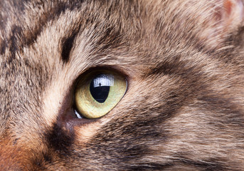 Close up image of an eye of a cat