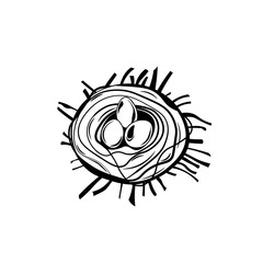 Bird nest. Robin nest, eggs and feathers. hand-drawn illustration. Vector isolated on white